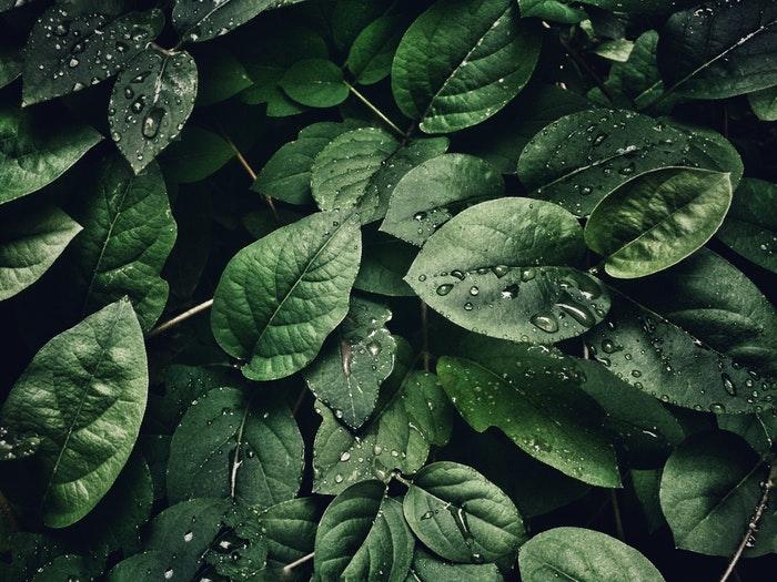 5 grunn til å prøve naturfotografering